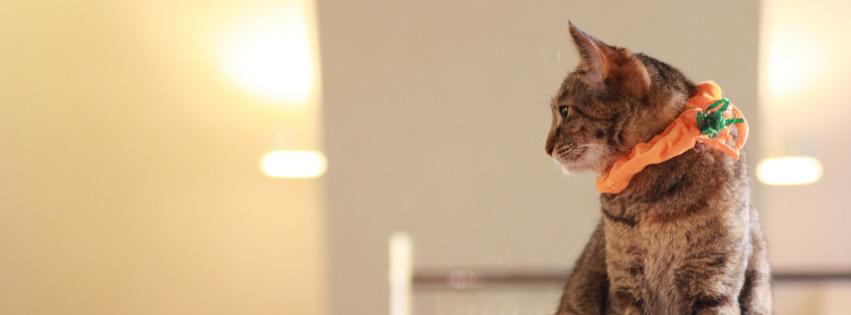 猫好きのための猫動画メディア